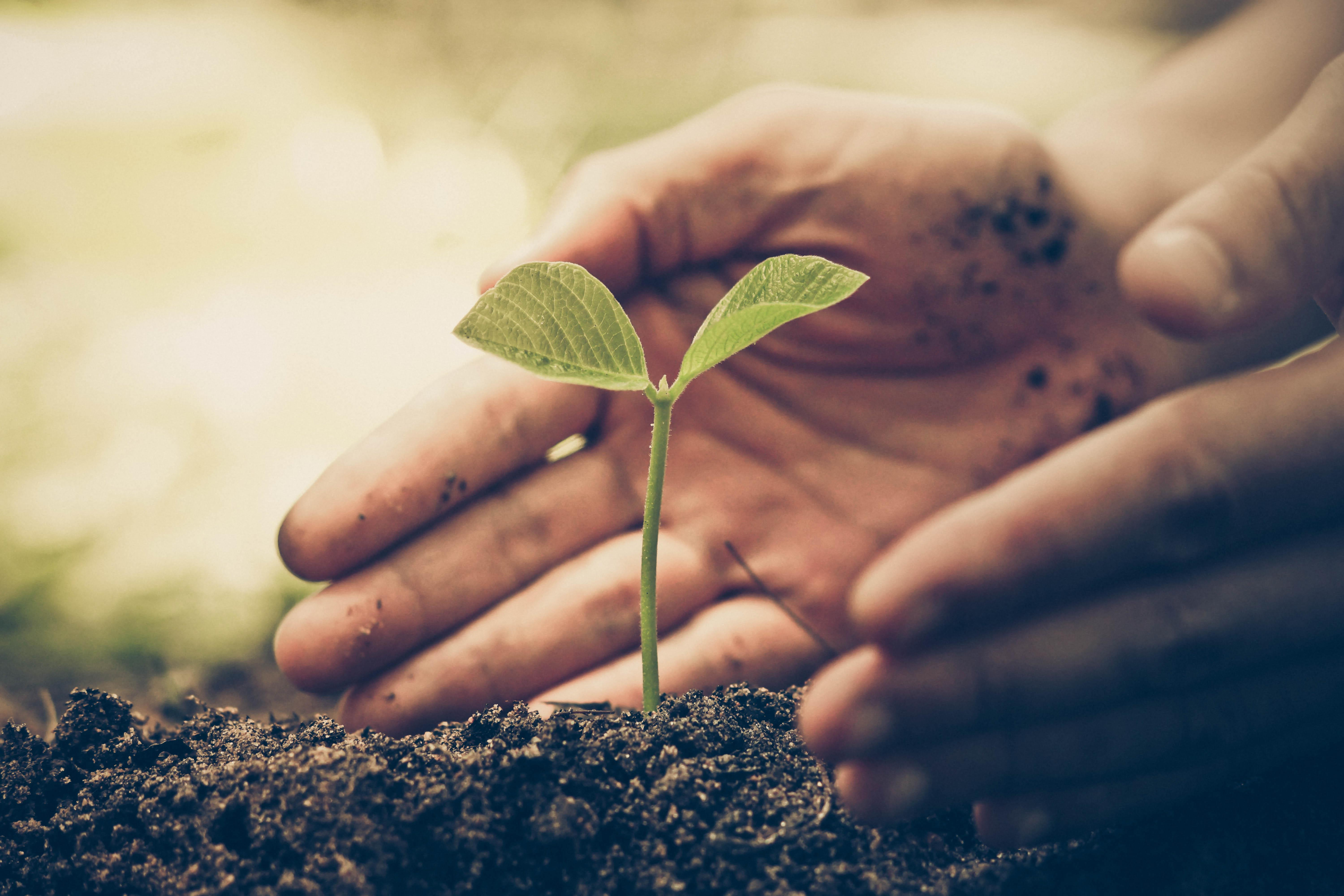 Getting Down to Earth: Caring for our patients AND our planet